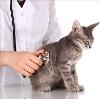 Ветеринарные клиники в Лоухах